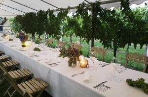 Belvedere vineyard